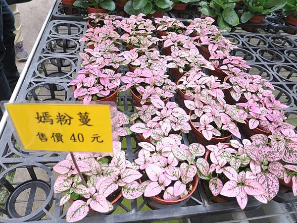 金車蘭花園18.JPG