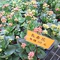 金車蘭花園19.JPG