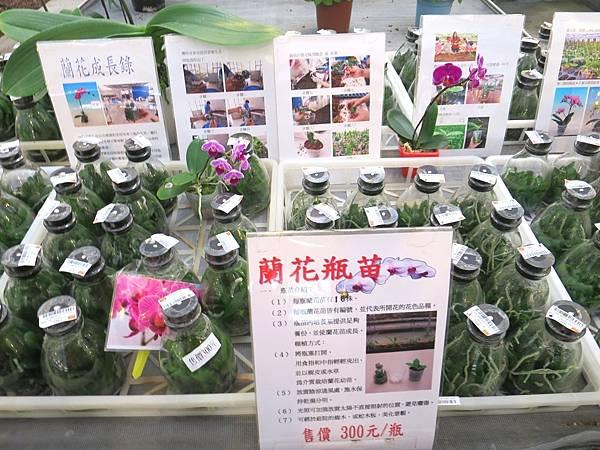 金車蘭花園20.JPG