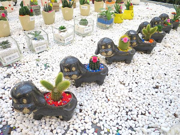 金車蘭花園34.JPG