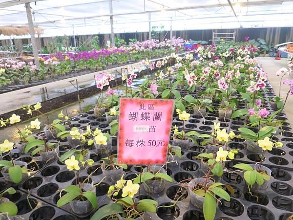 金車蘭花園45.JPG