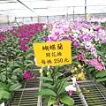 金車蘭花園47.JPG