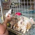 A.maze兔子迷宮43.jpg
