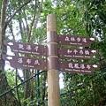 小烏來天空步道 (38).jpg