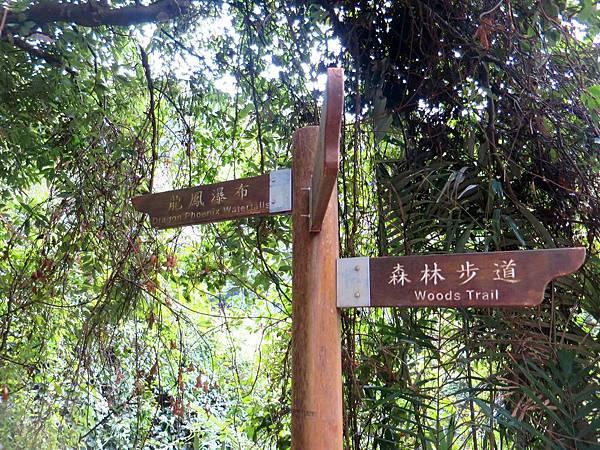 小烏來天空步道 (55).jpg