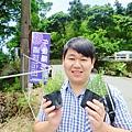午後陽光繡球花田 (5).JPG