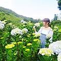 午後陽光繡球花田 (18).JPG