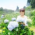 午後陽光繡球花田 (21).JPG