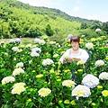 午後陽光繡球花田 (29).JPG