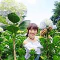 午後陽光繡球花田 (35).JPG