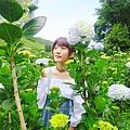 午後陽光繡球花田 (38).JPG