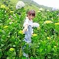 午後陽光繡球花田 (41).JPG