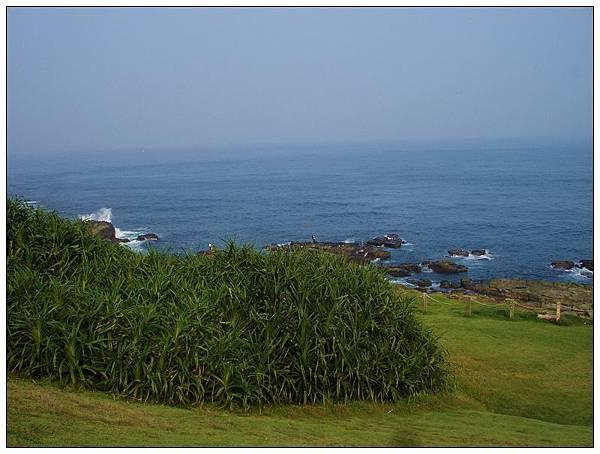 草坪2.jpg
