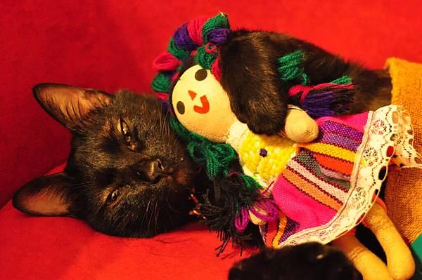抱墨西哥娃娃  吉古快睡著了