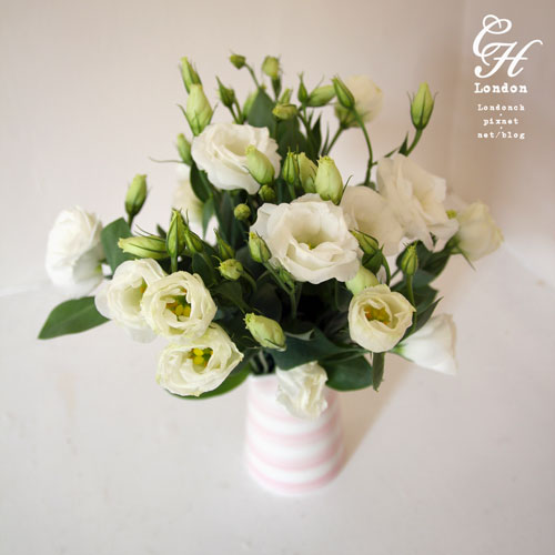 Lisianthus-Flower