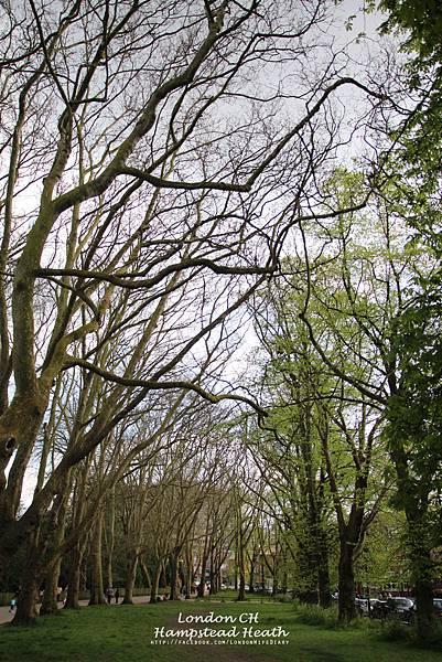 Hampstead-Heath09