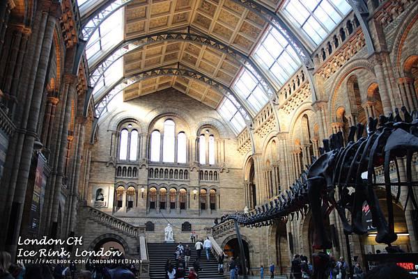 Natural-History-Museum01