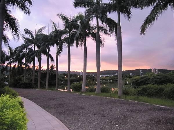 高美館園區黃昏椰子樹