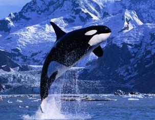 whale_classic.jpg