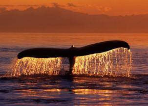 whale_sunset.jpg