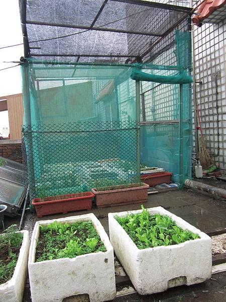 新菜園 001-1.jpg