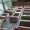 新菜園 003-1.jpg