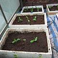 新菜園 005-1.jpg