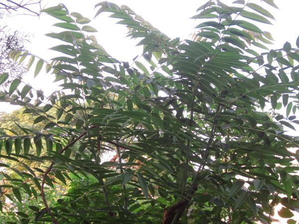 新菜園 012─01.jpg