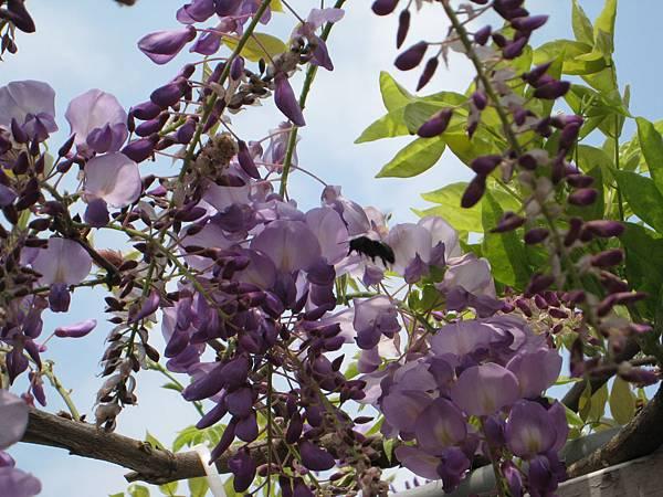 浪漫的紫薇 038