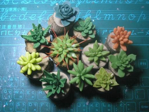 植物2-4.JPG