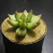 植物1-4.JPG