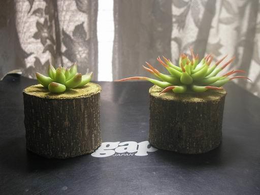 植物1-6.JPG