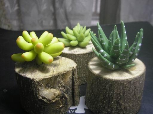 植物2-1.JPG
