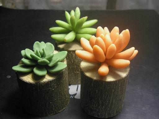 植物2-2.JPG