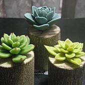 植物2-3.JPG