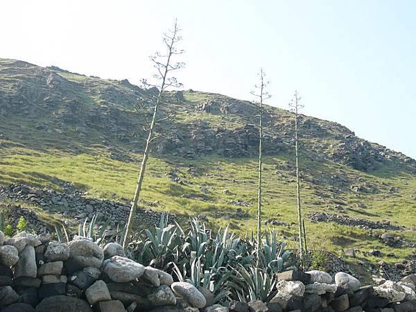 玄武岩山崖