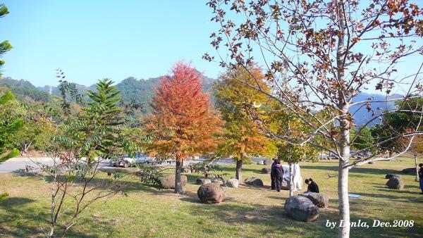 P1080788-紅樹.JPG