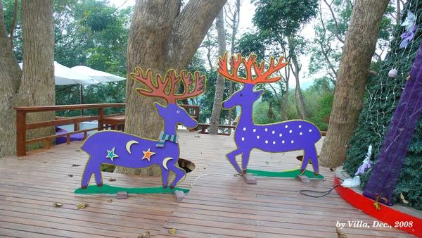 P1090021-紫馴鹿.JPG