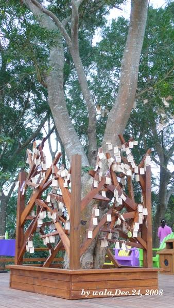 P1090043-許願樹.JPG