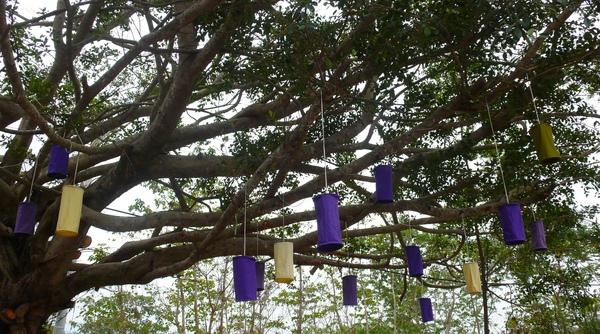 P1090081-樹.JPG