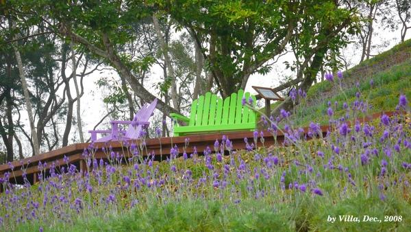 P1090068-2椅+羽葉.JPG