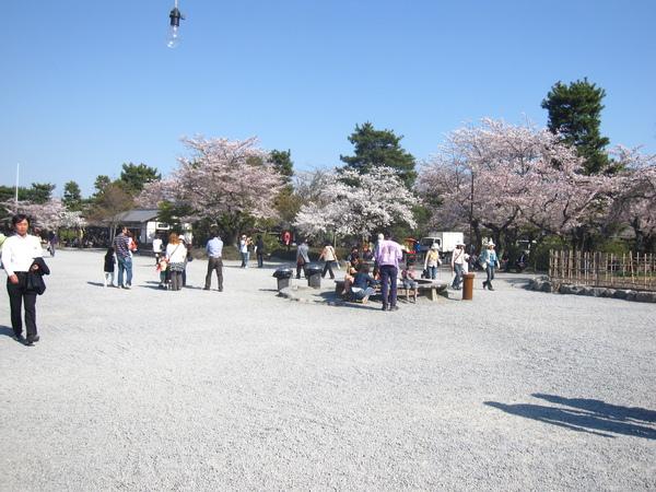 櫻樹藍天白砂
