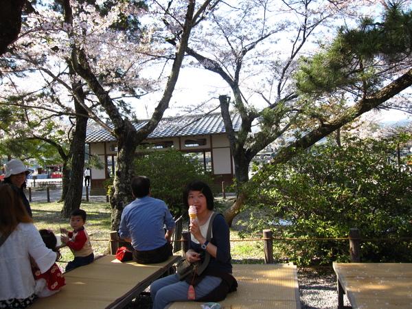 櫻花樹下吃霜淇淋