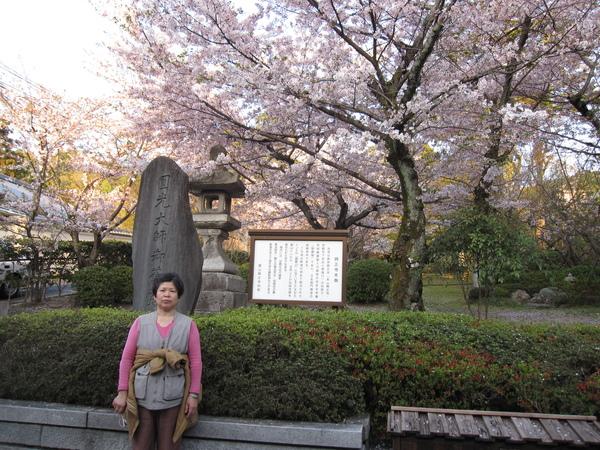 老媽與櫻花