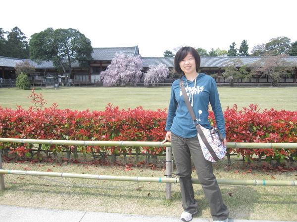 我跟遠遠的櫻花