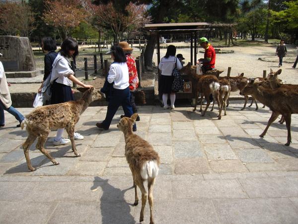 小學生們和鹿群