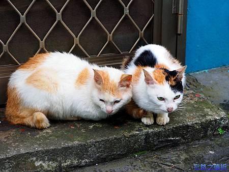 11十分貓.jpg