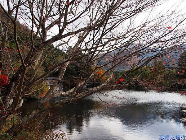 13湯布院金麟湖-2.jpg