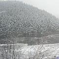3往飛驒沿路飛雪-3.jpg