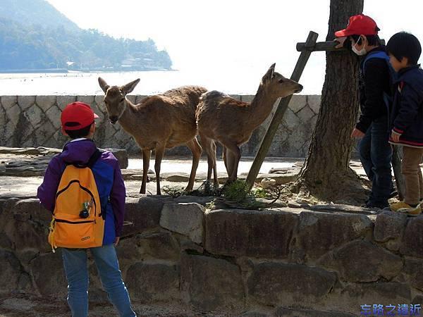 8宮島小孩與鹿.jpg